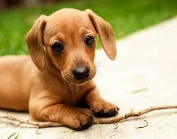 puppy_pic